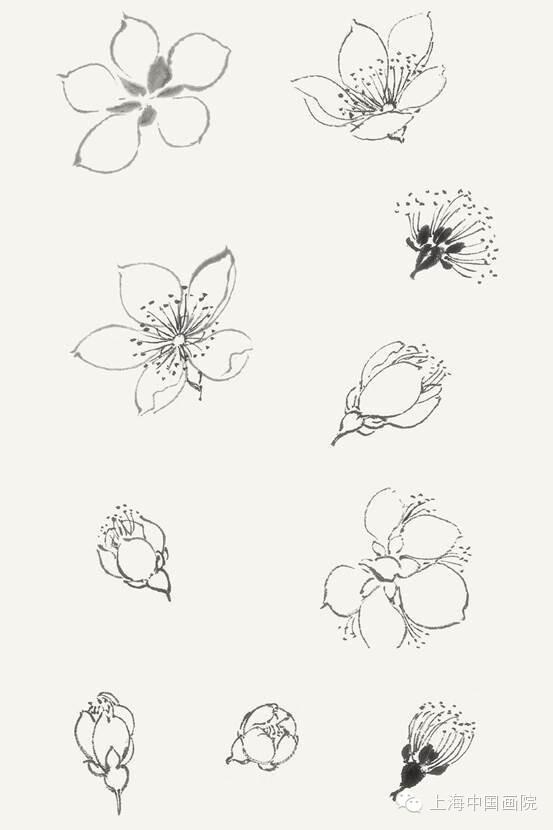 简笔画桃花的画法-国画花的画法